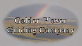 Golden Plover Guiding Company